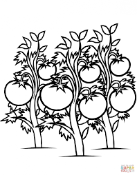 Small Picture Coloring Pages Tomatoes Plants Coloring Page Free Printable