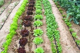 Resultado de imagen para soberania alimentaria