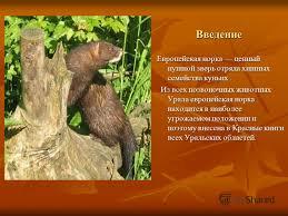 Презентация на тему Доклад Животные Красной книги Челябинской  2 Введение Введение Европейская