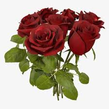 rose 3d models cgstudio
