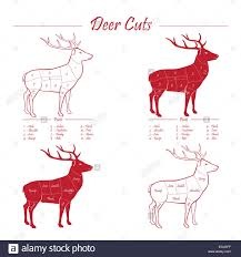 Deer Butcher Chart Deer Venison Meat Cut Diagram Sheme Elements Set Red On
