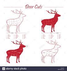 Deer Venison Meat Cut Diagram Sheme Elements Set Red On