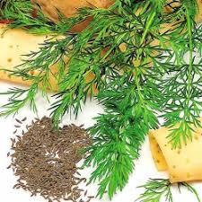 Купить <b>семена тмина</b> в Москве, России с доставкой почтой ...