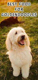 Goldendoodle Weight Chart Best Dog Food For Goldendoodles To Keep Them Happy And Healthy