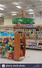 Dog Receipt Petsmart Return Policy No Receipt Examples Pet Store Dog Stockfotos