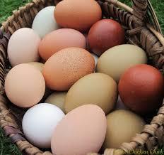Resultado de imagen de imagenes sobre huevos