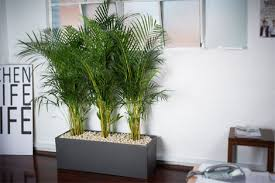 office indoor plants. Decorate Offices With Vibrant Indoor Plants Office I