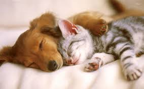 puppy and kitten sleeping.  Sleeping Kittens And Puppies Cute Cats Dogs Baby Cat Wallpaper  Wallpaper Intended Puppy Kitten Sleeping E