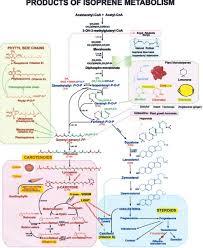 Iubmb Nicholson Metabolic Pathways Chart A Lifetime Of Metabolism Springerlink