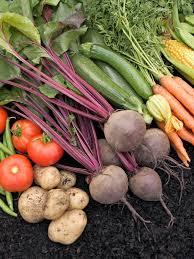 Kitchen Garden Vegetables 13 Healthiest Vegetables To Grow In Your Garden Hgtv
