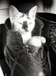 g cats at war crete voices from russia from the russian web a photo essay felines at the front or pack up a kitty in your old kit bag and smile smile smile 00 0g cats at war crete