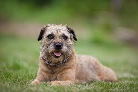 por dog breed selector