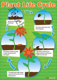 Plant Life Cycle Flow Chart 86 Best Weather And Plants Unit Images In 2018 Creative