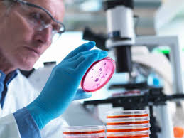 Lab Analyst Analyst Microbiology Vacancy Available Syngene