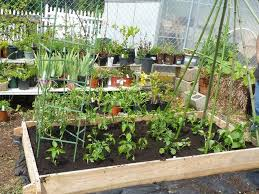 get the most out of your raised bed garden