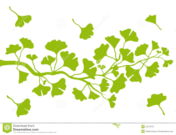 tree branch with leaves vector. ginkgo branch with leaves, vector tree leaves h