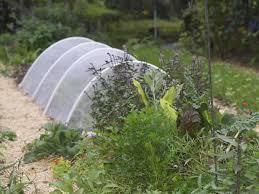 row cover in the garden