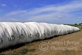 Silage Bags My Photos Pinterest Bag