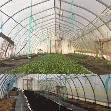let there be light how island greenhouses are growing produce year round cbc news