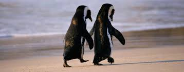 two penguins holding hands. Simple Holding Penguin Couple Hold Hands To Two Penguins Holding Hands H