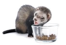 """Résultat de recherche d'images pour """"ferret food"""""""