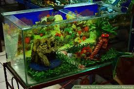 image titled set up a planted goldfish aquarium step 2