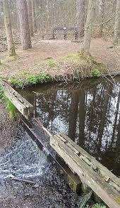 een bankje in het bos met een verhaal van de dingen voorbij gaan maar er komt meer vanaf volgende week een interview op deze bank de eerste in de