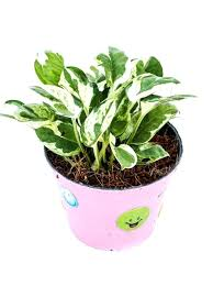 office plants no light. Fluorescent Lights Cool Office Plants Light 121 Medium Image For Mesmerizing . No