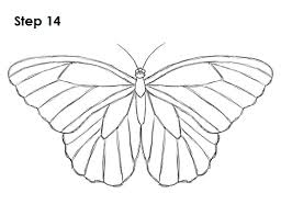 drawing butterfly pictures.  Drawing Draw Butterfly 14 Inside Drawing Pictures