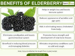 Image result for elderberry