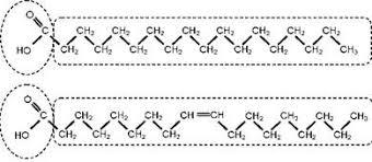 Реферат Незаменимые полиненасыщенные жирные кислоты и их пищевые  Структурная формула насыщенной стеариновой кислоты 18 0 вверху и мононенасыщенной олеиновой кислоты 18 1n 9 внизу