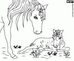 Disegni Di Cavalli Da Colorare E Stampare