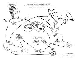food web drawing