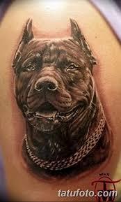 фото тату питбультерьер от 25102017 012 Tattoo Pit Bull Terrier