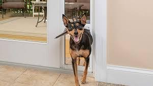 5 best doggy doors for sliding glass