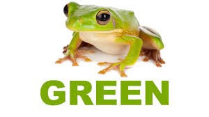 Image result for green frog picture