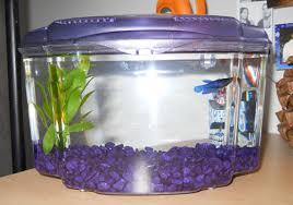 petco betta fish tanks. Contemporary Tanks Throughout Petco Betta Fish Tanks