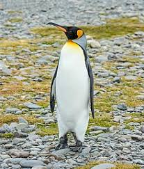 penguin. Interesting Penguin Penguin Inside Penguin E
