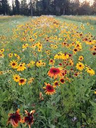 facebook the vermont wildflower farm