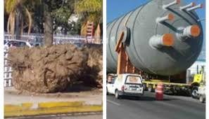 Calderas Gigantes ocasionan derribo de árboles en San Juan, graves daños a  la ecología - Voz Imparcial