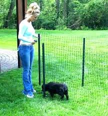 invisible fence for small dogs. Invisible Fence Collars For Small Dogs Dog Deluxe Fencing Kit Underground Petsafe In Ground Smal