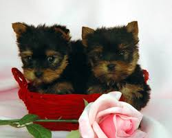our newest pups will be posted at 6 00 p m tonight