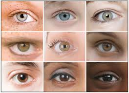 Eye Color Chance Chart The Genetics Of Eye Color Hudsonalpha Institute For