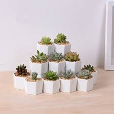 office flower pots. perfect planterflower pot for succulent cacti flowers live or artificial plants home office modern minimalist and cute flower pots