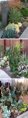 Drought Tollerant Border & Garden Yard Inspitation For Hot Climates - Succulent  Gardening