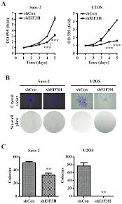 Eukaryotic Translation Initiation Factor 3h Eif3h