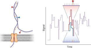 Nanopore Sequencing Meets Epigenetics Nature Methods