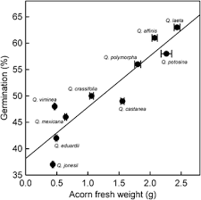 Types Of Acorns Chart Acorn Weight As Determinant Of Germination In Red And White