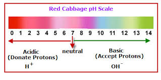 Red Cabbage Juice Indicator Chart Search Results For Red Cabbage Ph Scale Vancleaves
