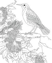 Bird Printable Coloring Pages Bird Nest Coloring Page By Birds In